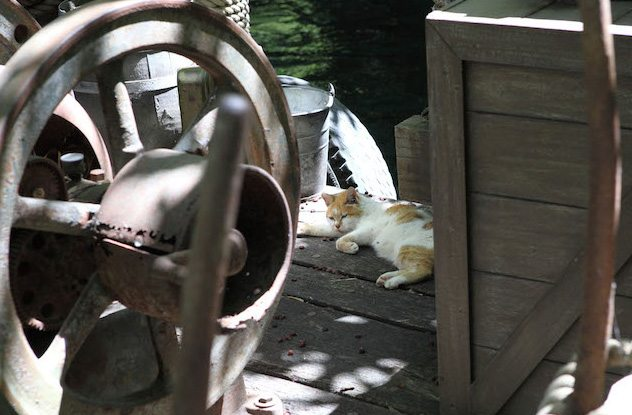 One of Disneyland's feral cats lounging in the sun