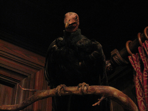 club_33_vulture