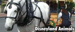 Disneyland Animals