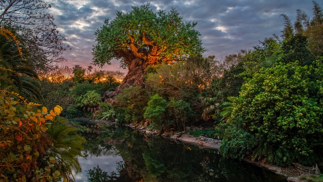 tree of life sunset